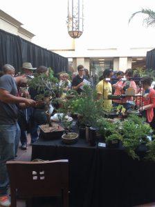 Bonsai Show Nebraska